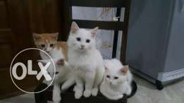 For sale / .3 months .4 funny cats /