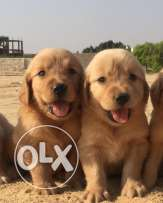 best puppies for sale