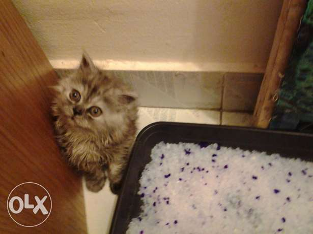 Cute kittens need a new home! 3 months old! Urgent!