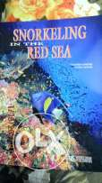 snorkeling in the red sea book