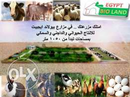 Bio land Egypt farm