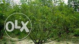 1 Land for sale in 6th October city Near dream land and mall of egypt1 6 أكتوبر -  1