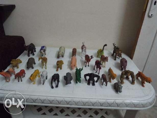 animals zoo collection