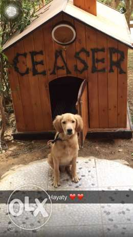 A dog house for sale