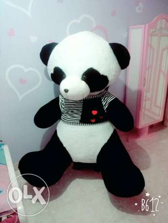 Panda for rent or sale
