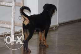 5months rot female