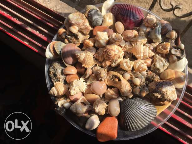 beautiful shells and stones from the sea