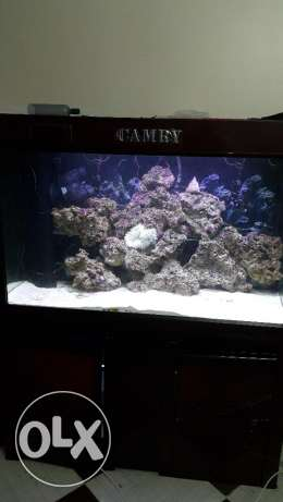 Marine aquarium with full equipment 120 CM